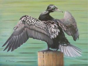 Little Black Cormorant Painting - Dillon - Bird Paintings