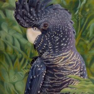RedTailed Black Cockatoo