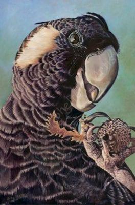 Female Baudin's Black Cockatoo- Edwine Luncheon - Bird Paintings