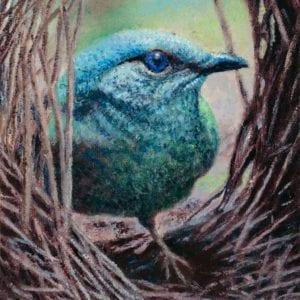 Bower of Bliss Female Satin Bowerbird